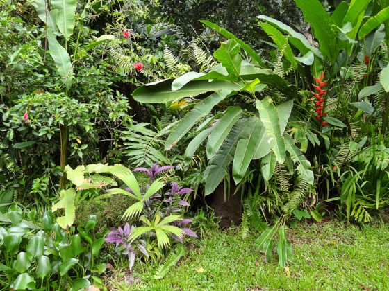 Beautiful Plants In Costa Rica