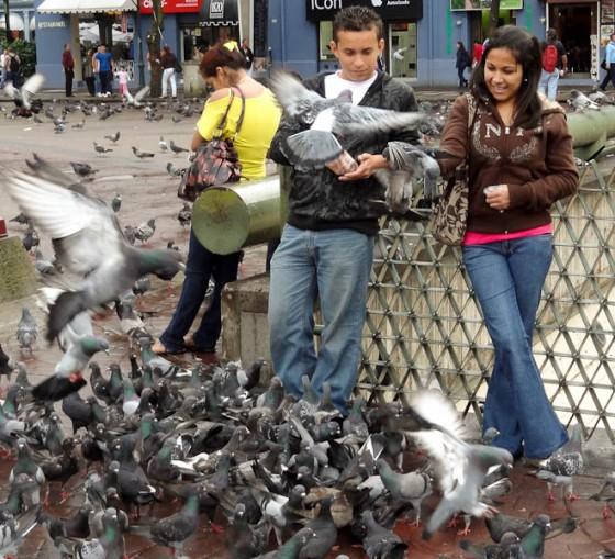 Feeding Pigeons In Plaza de las Artes