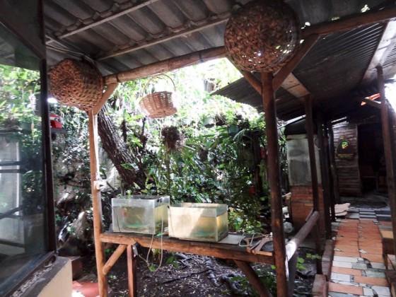 Garden On Ground Floor