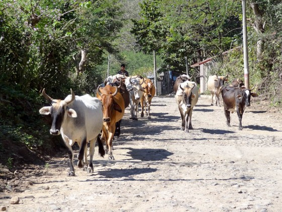 Rush Hour In Yoloaiquin