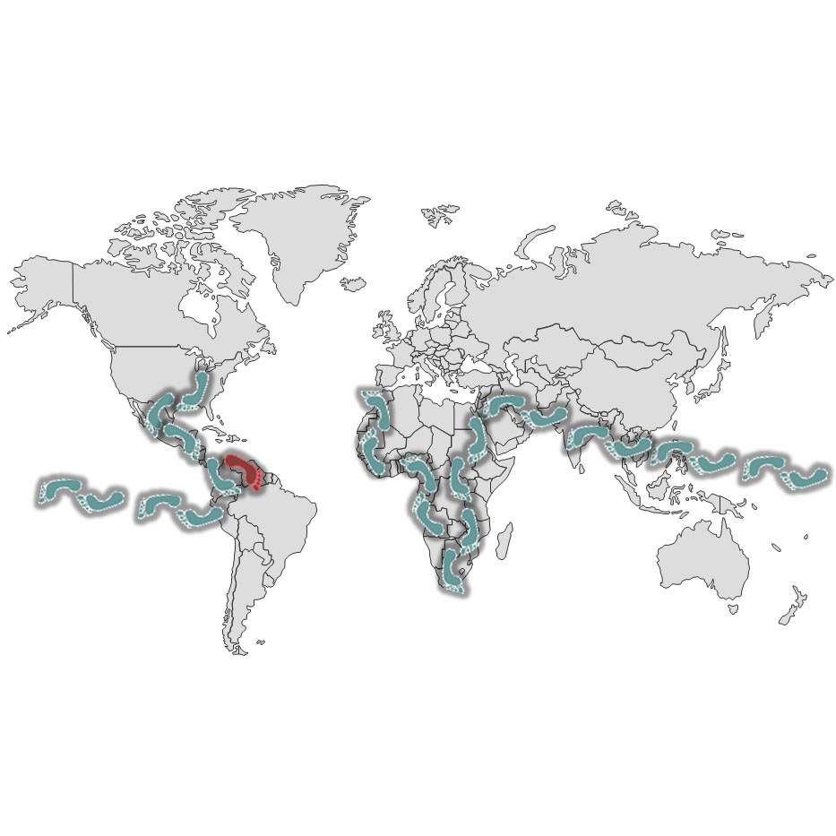 Happy Nomad Tour Route With Venezuela Highlighted