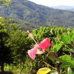 Flower With A View - Taken 9-Dec-2011 - Portobelo, Panama