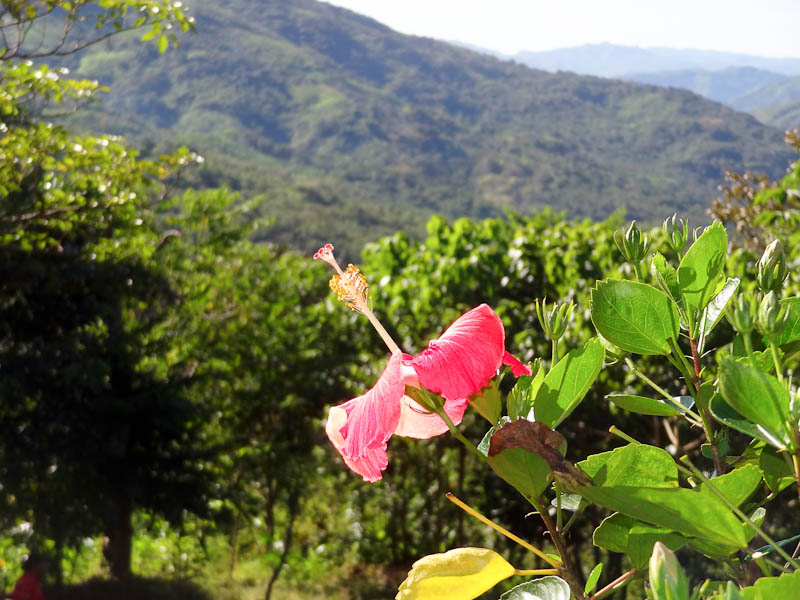 Flower With A View - Taken 9-Dec-2011 - Portobelo, Panama