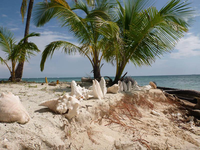 Amazing Seashells