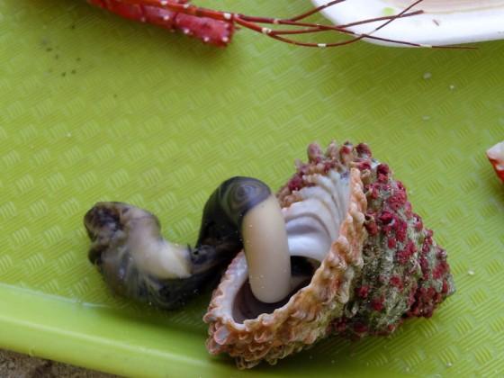 A Snail I Think