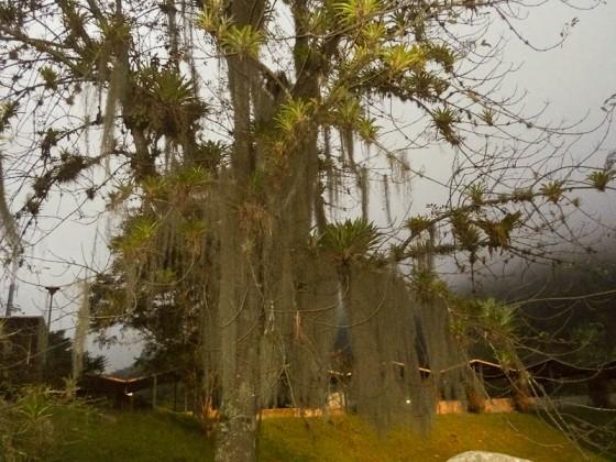 Cool Tree At Universidad de Los Andes