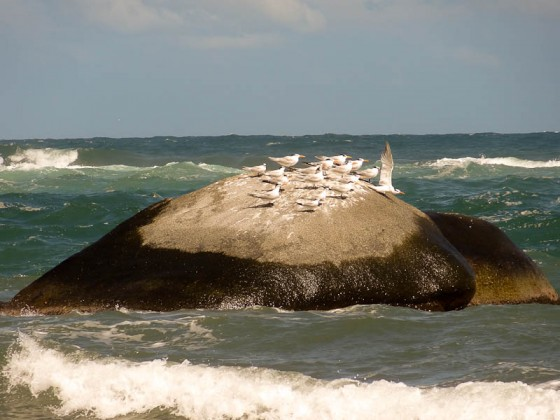 Birds On A Rock In The Sea