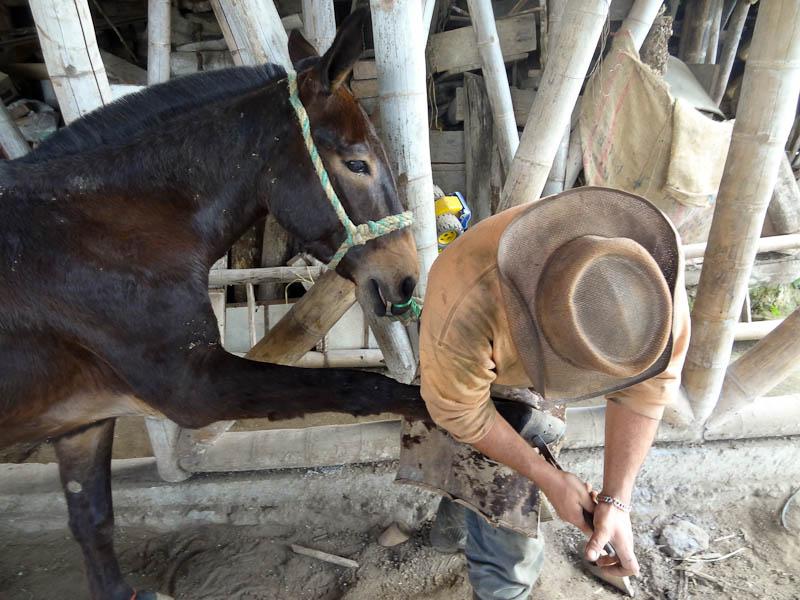 Installing A Horseshoe