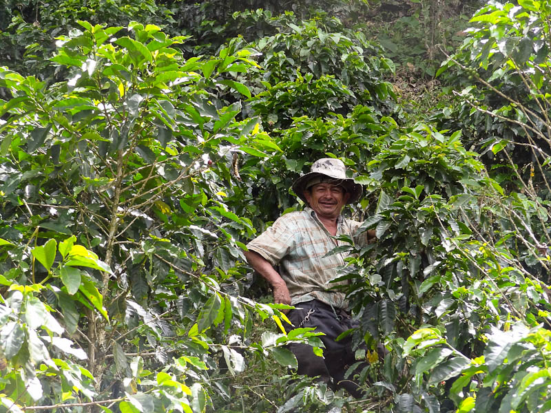 The Real Juan Valdez Surrounded By Coffee Plants - Taken 2-Feb-2012 - Neira, Coffee Zone, Colombia
