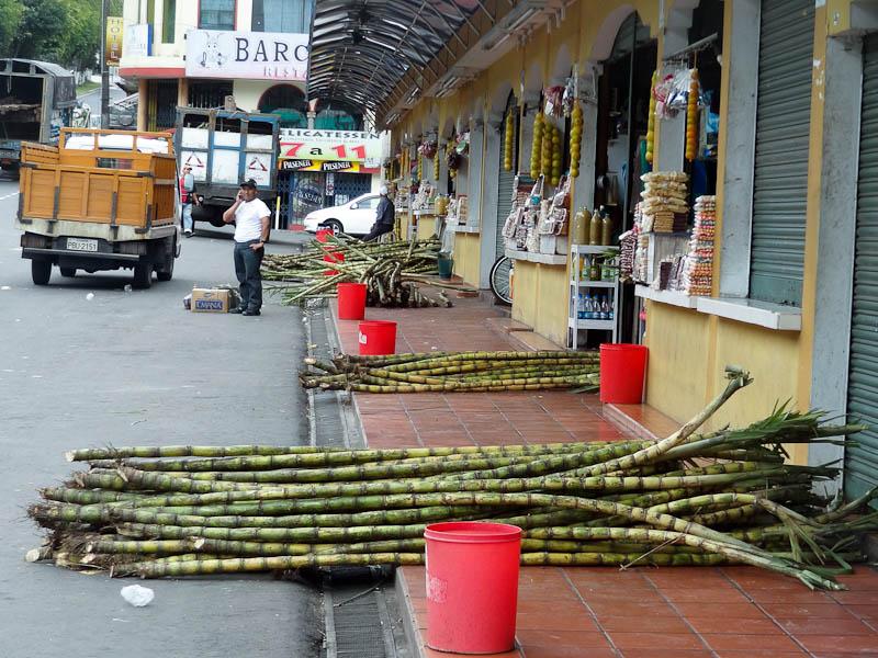 Sugar Cane At The Market
