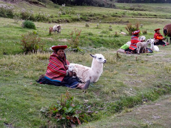 Ladies With Llamas