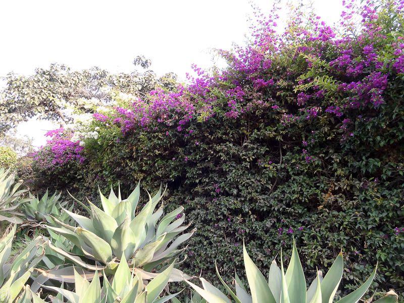 Beautiful Vegetation