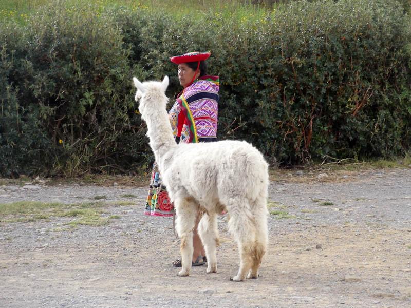 Cusquena With Her Llama