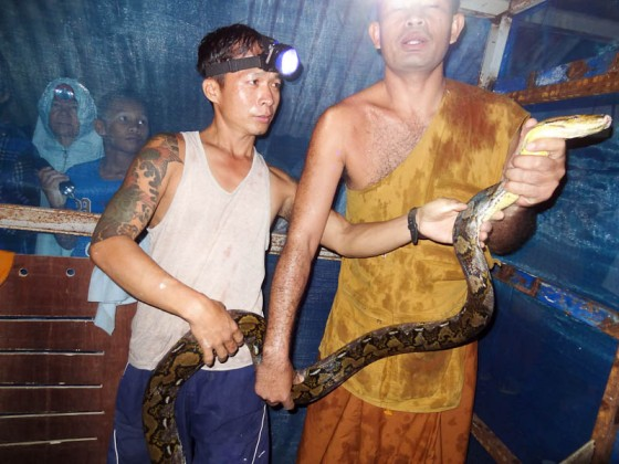 Removing The Snakes