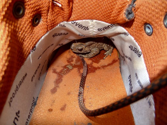 A Frog In My Shoe
