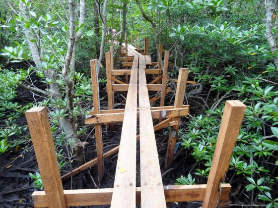 Mangroves Cut For This Bridge