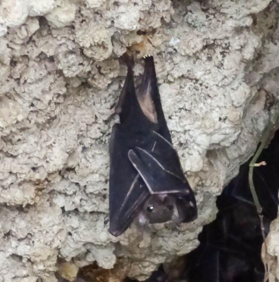 Bat Hanging Upside-Down