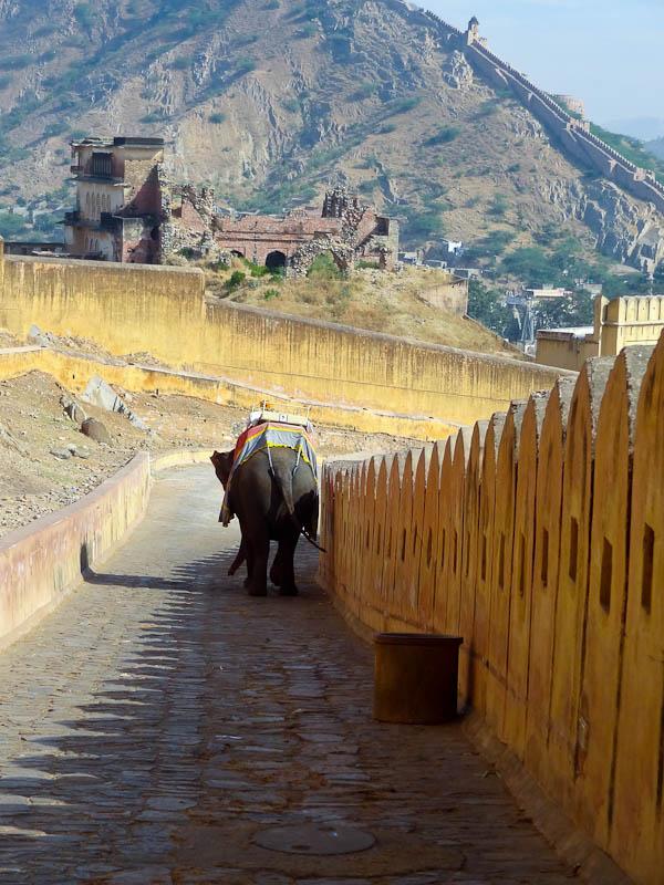Elephant Downhill