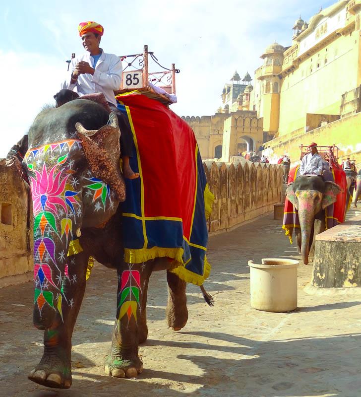 Elephant Mountain - Taken 5-Dec-2012 - Jaipur, India