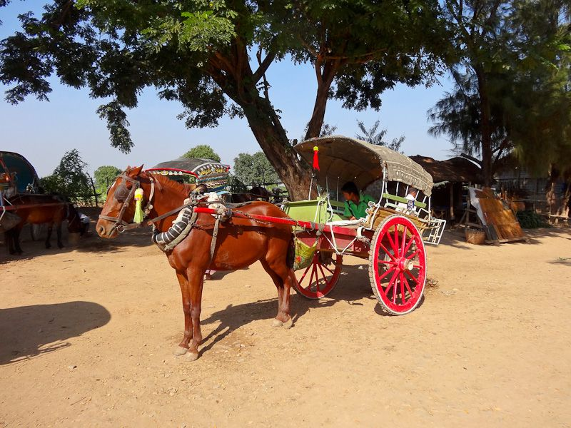 Beautiful Horse Cart