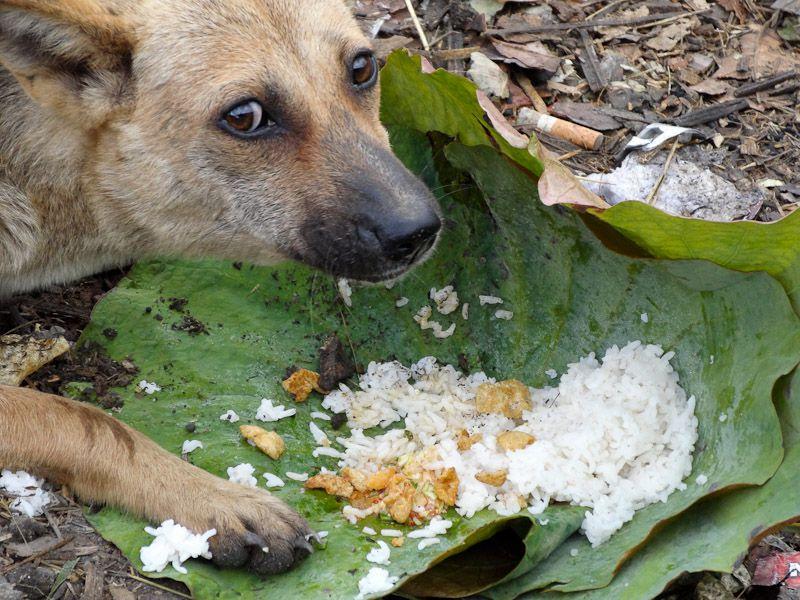 Dog Eating Some Rice