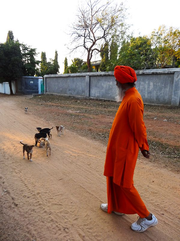 Monk With Dogs