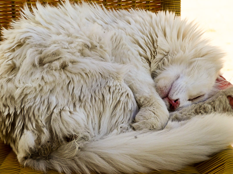 Sometimes You Just Need To Sleep - Taken 22-May-2013 - Nicosia, Turkish Republic Of Northern Cyprus