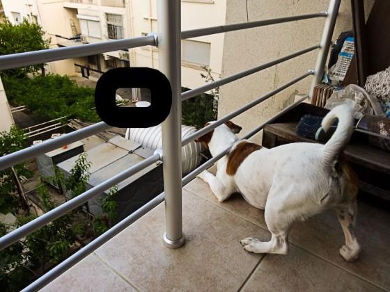 Afa Barking At A Cat