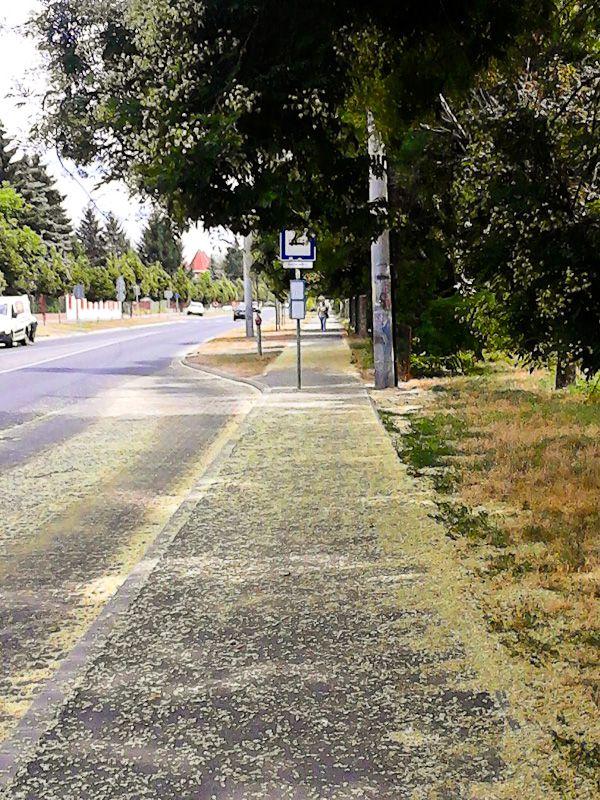 Follow The Yellow Brick Road - Taken 31-Jul-2013 - Debrecen, Hungary
