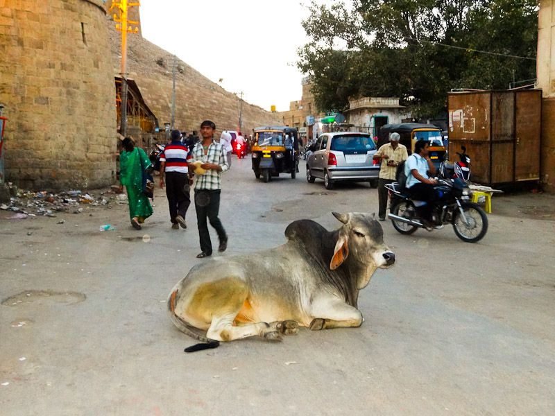 The Middle Of The Street Is A Convenient Place To Rest