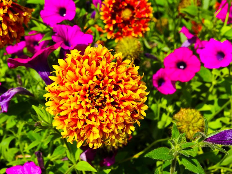 Gorgeous Georgian Garden - Taken 4-Sep-2013 - Tblisi, Georgia