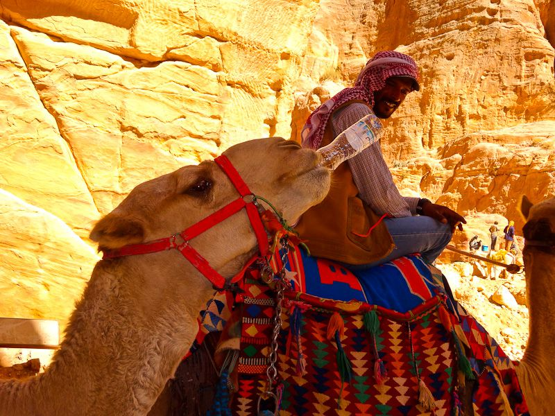 A Camel Drinking Water