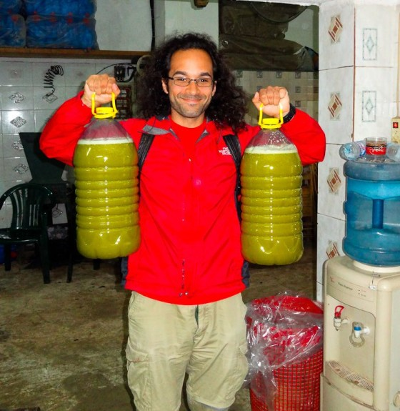 Making Olive Oil
