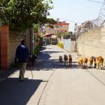 Village And City Life Collide - Taken 5-Dec-2013 - Addis Ababa, Ethiopia