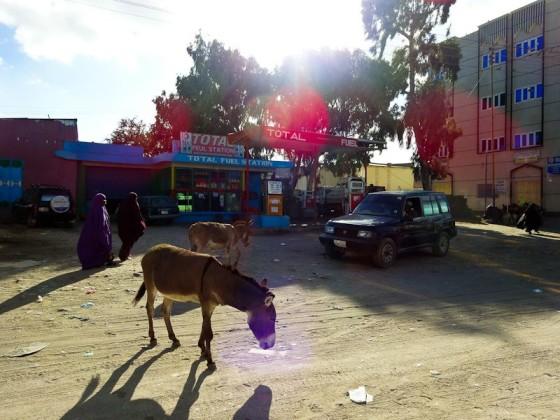 Random Picture In Hargeisa