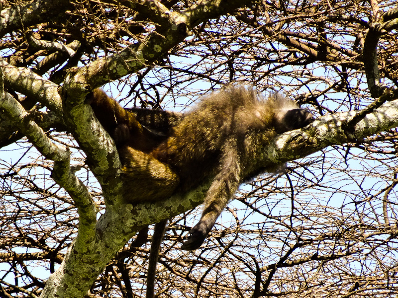 Hanging Out - Taken 17-Jan-2014 - Serengeti, Tanzania