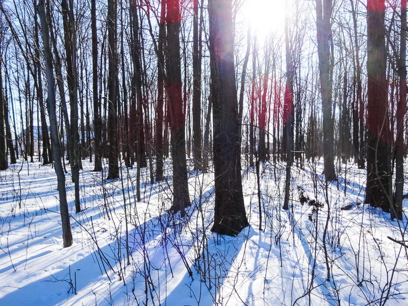 Winter Wonderland - Taken 15-Feb-2014 - Cleveland, Ohio, USA