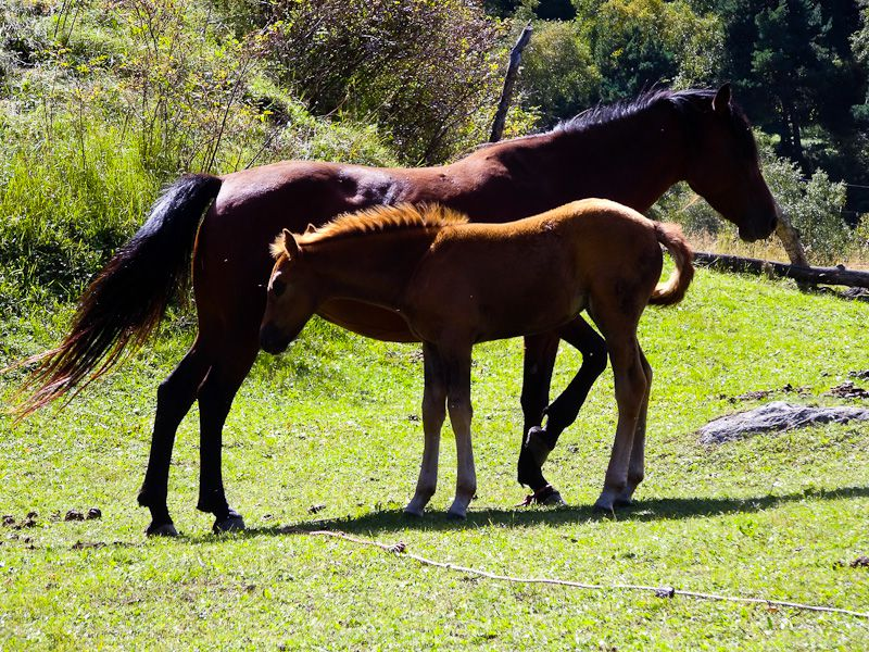 A Horse And Pony On The Trail