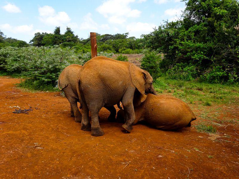 The Beautiful Elephants