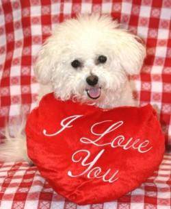 Dog I love you pillow