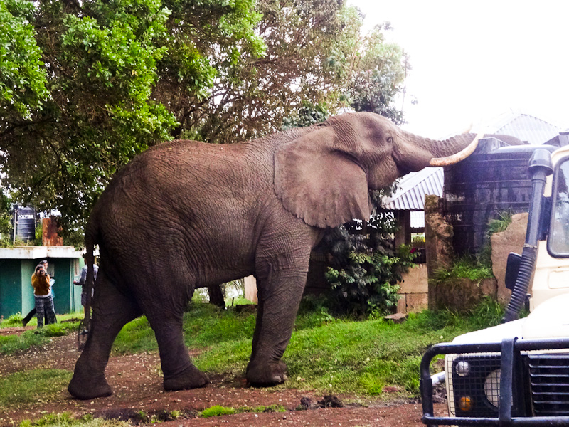 An Elephant In My Camp